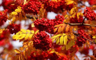 «Харитины и Фомы — недалече до зимы»: народные приметы на 18-19 октября