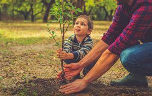 Подбор вашего дерева по гороскопу друидов